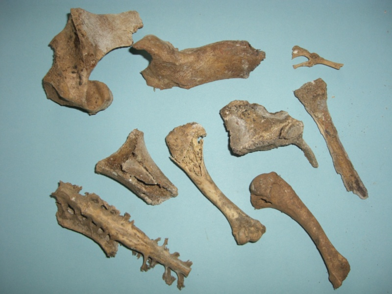 Bone collections 1