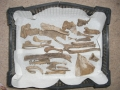 Bones in tray 1