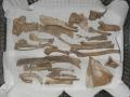 Bones in tray 2